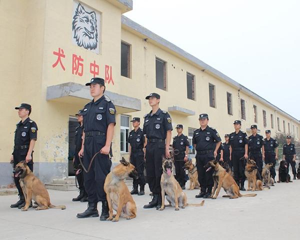 北京犬防服务