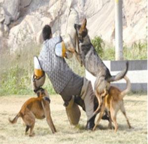 福建犬防服务